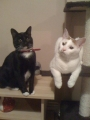 FREE TO GOOD HOME 2 MALE CATS