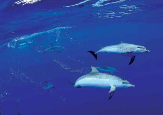 Whale and dolphin watching excursion in tenerife
