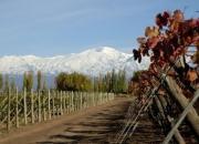 Wines high range from mendoza argentina