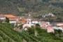 Property with wine - Portugal, Oporto
