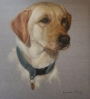 Stunning Pet portraits, a must have for all dog lovers