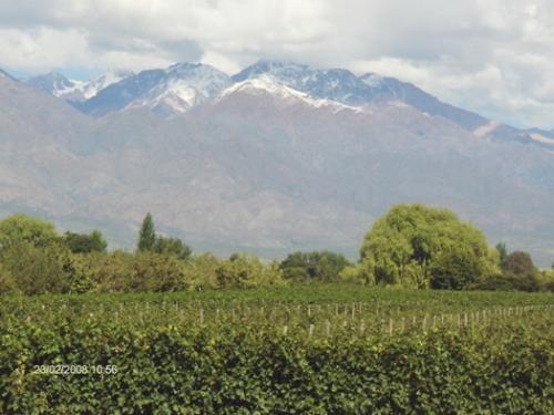 Land c/olives fron argentina /mendoza 164 hta sales