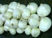 fresh white onion for sale