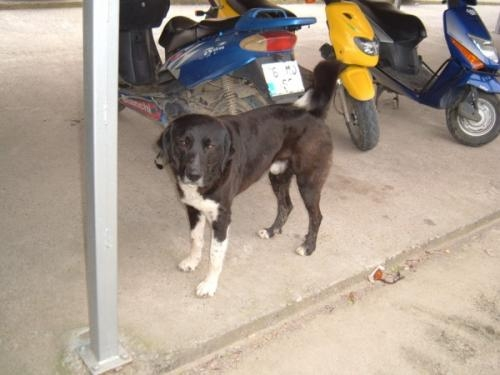 Please help the animal rehabilitation centre in dalyan, turkey