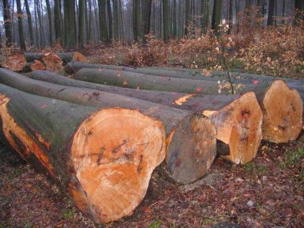 We have available padouk and bubinga wood of cameroonian origin