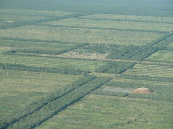 Pictures of Paraguay: sale 61. 943 hectares forest and natural field. 6