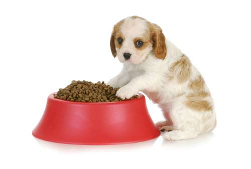 Dog food recipes for dogs of all ages