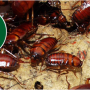 pest control Guildford in UK