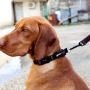 Shop online for the top quality of leather collars for pets