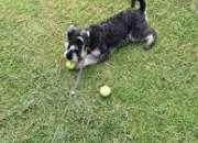 Dog Walker in Aberdeen