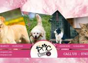 Dog Walking Services in Godalming,