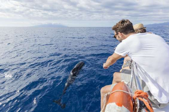 Whale watching tours in tenerife