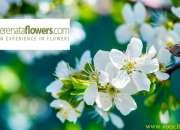 Serenata Flowers Discount Code & Voucher Code | upto 20% OFF @VoucherArena